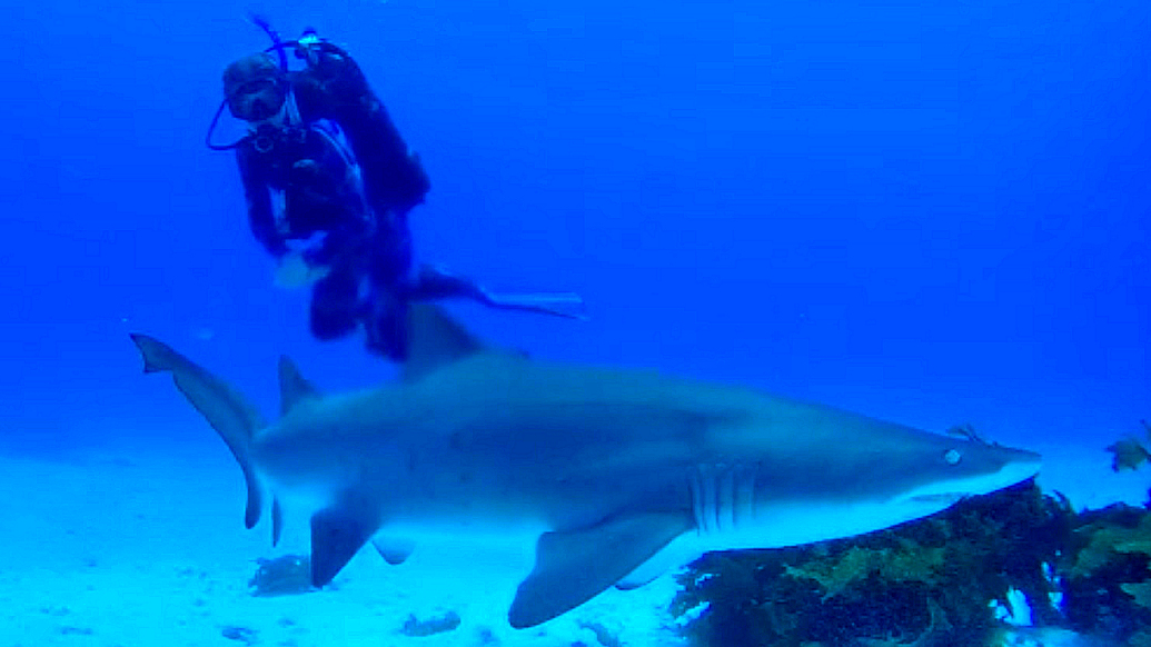 A dangerous sea creature! And a shark.