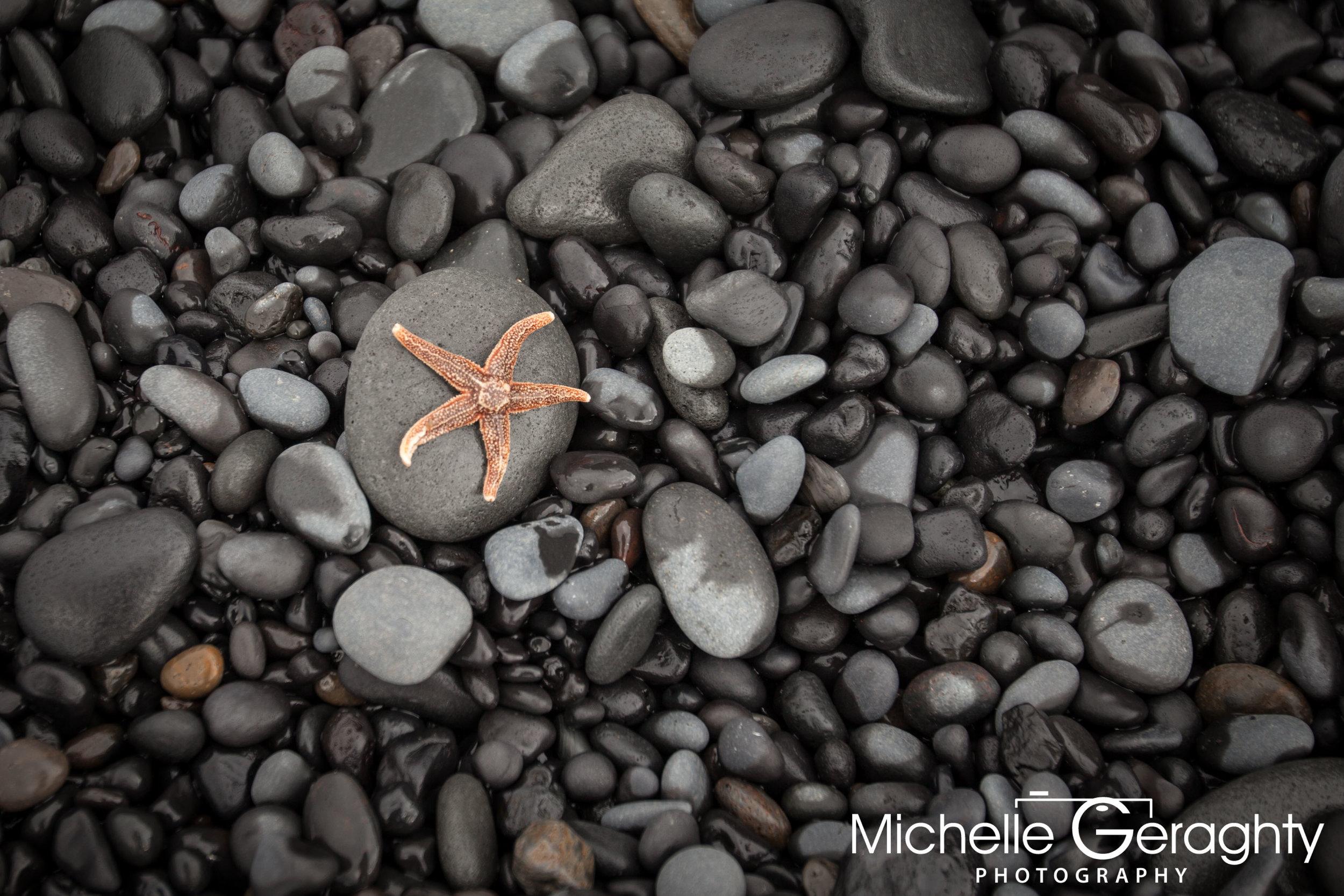 Starfish on Reynisfjara Black Sand Beach, Iceland