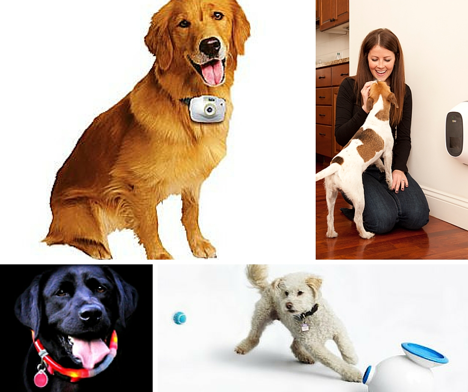 Crittercam, PetChatz, LED Dog Collar, iFetch