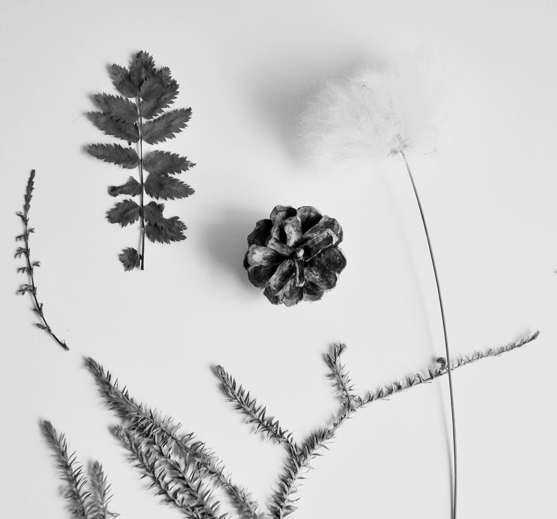 mehrere pflanzen arctic plant.jpg