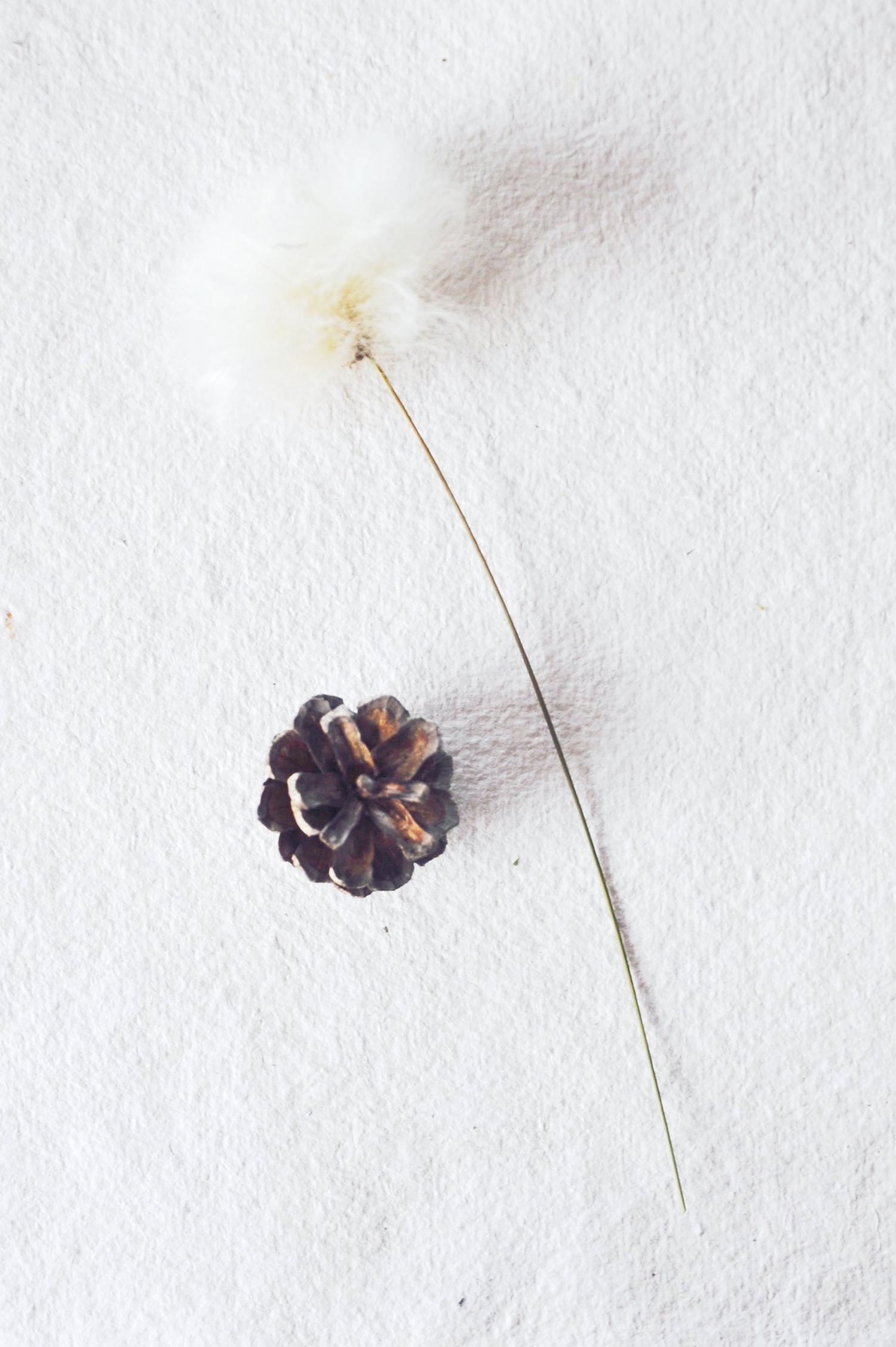 Wollblume mit tschurtsche arctic plants.jpg