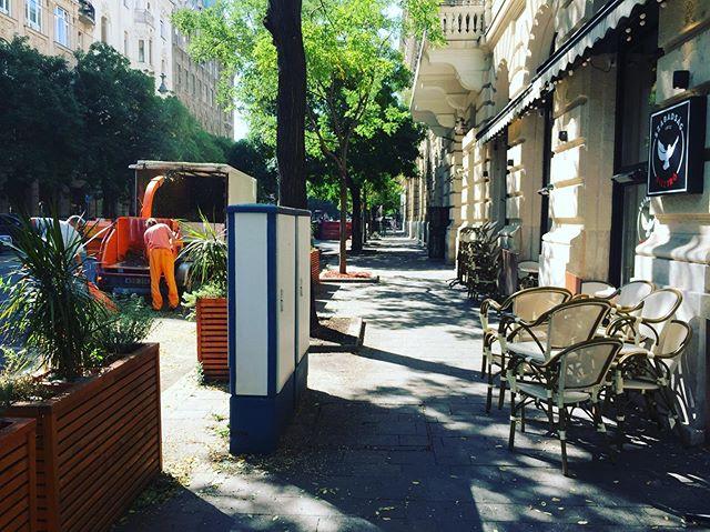 Ma az utcában gallyazták a fákat, teraszunk szokásos állapotát azóta helyreállítottuk! Várunk benneteket! #szabadsagbisztro