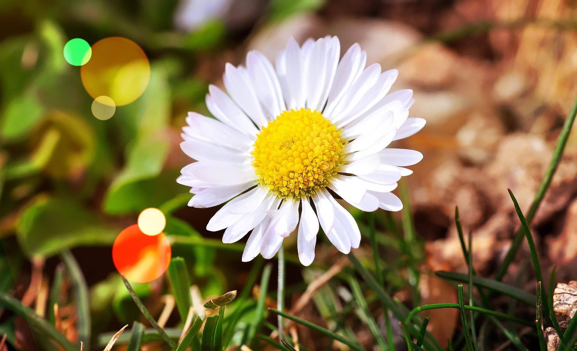 flower-696612_1920.jpg