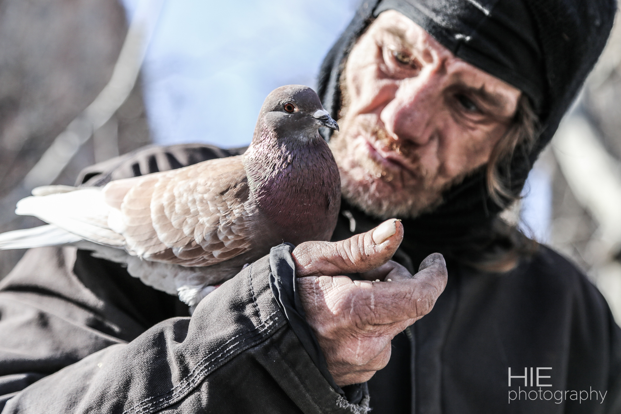 Pigeon Man in Washington Square Park, NYC