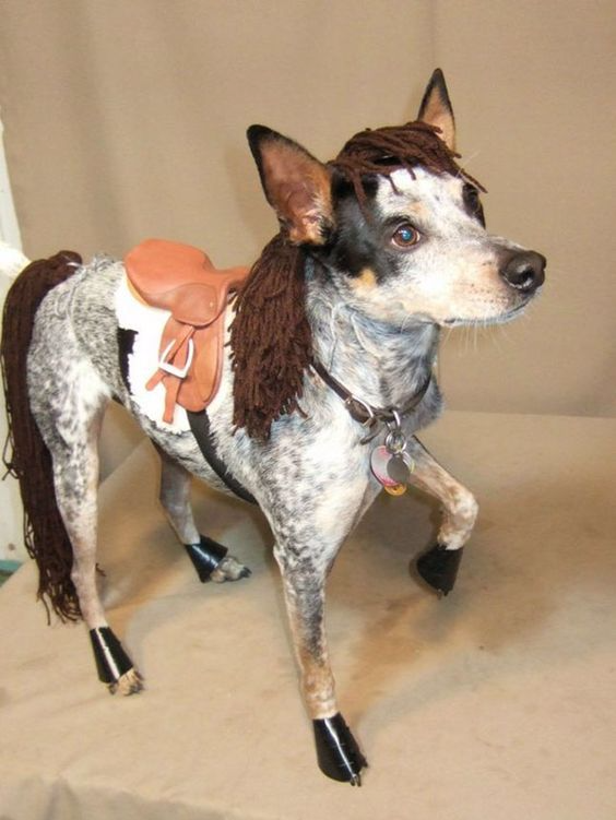 Dog Costume.png