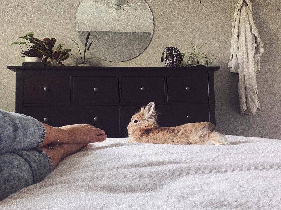 My bunny Nala has brought me so much joy and companionship!