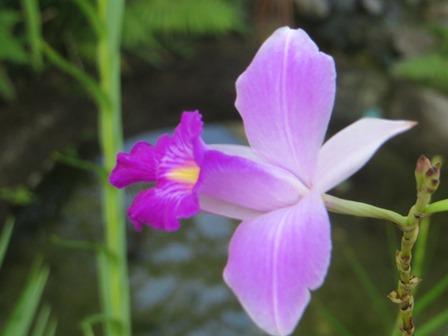 cr flower pic web.jpg