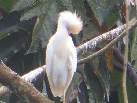 white bird cr pic web.jpg