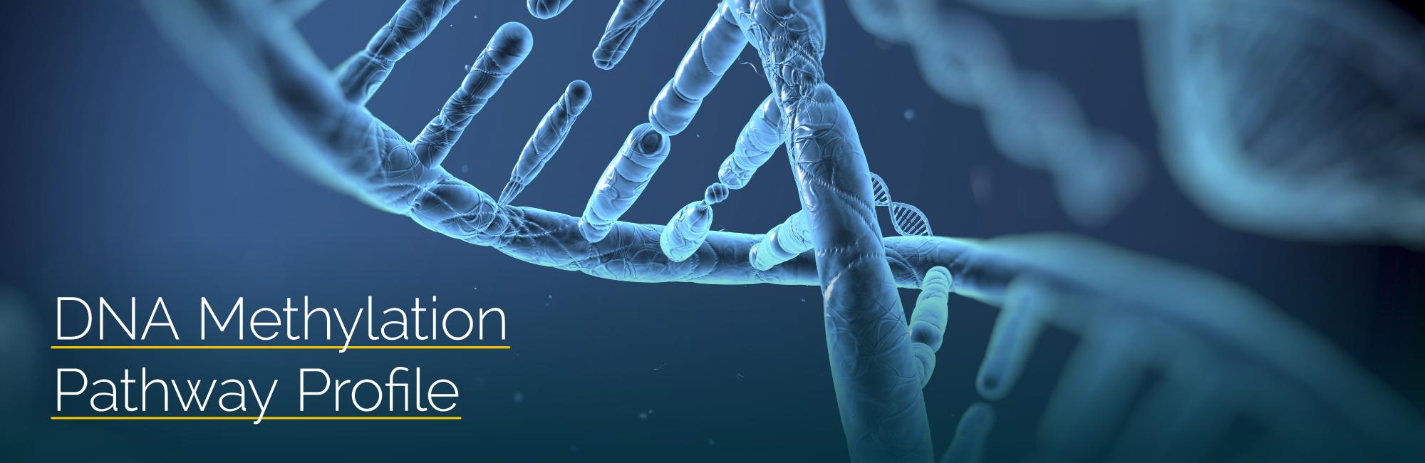 GLP_DNA_webpage-header.png