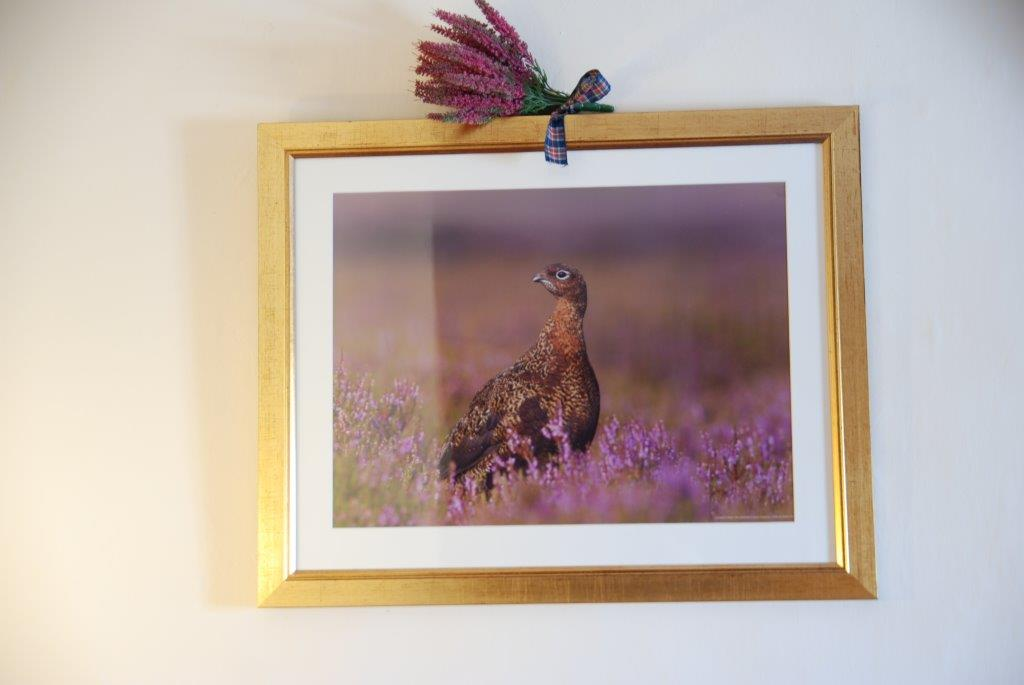 Room 2 grouse photo.jpg