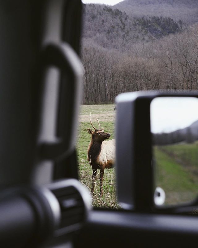 I could watch these elk for hours. I was patient and this bull kept getting closer, he seemed to want a photo.
