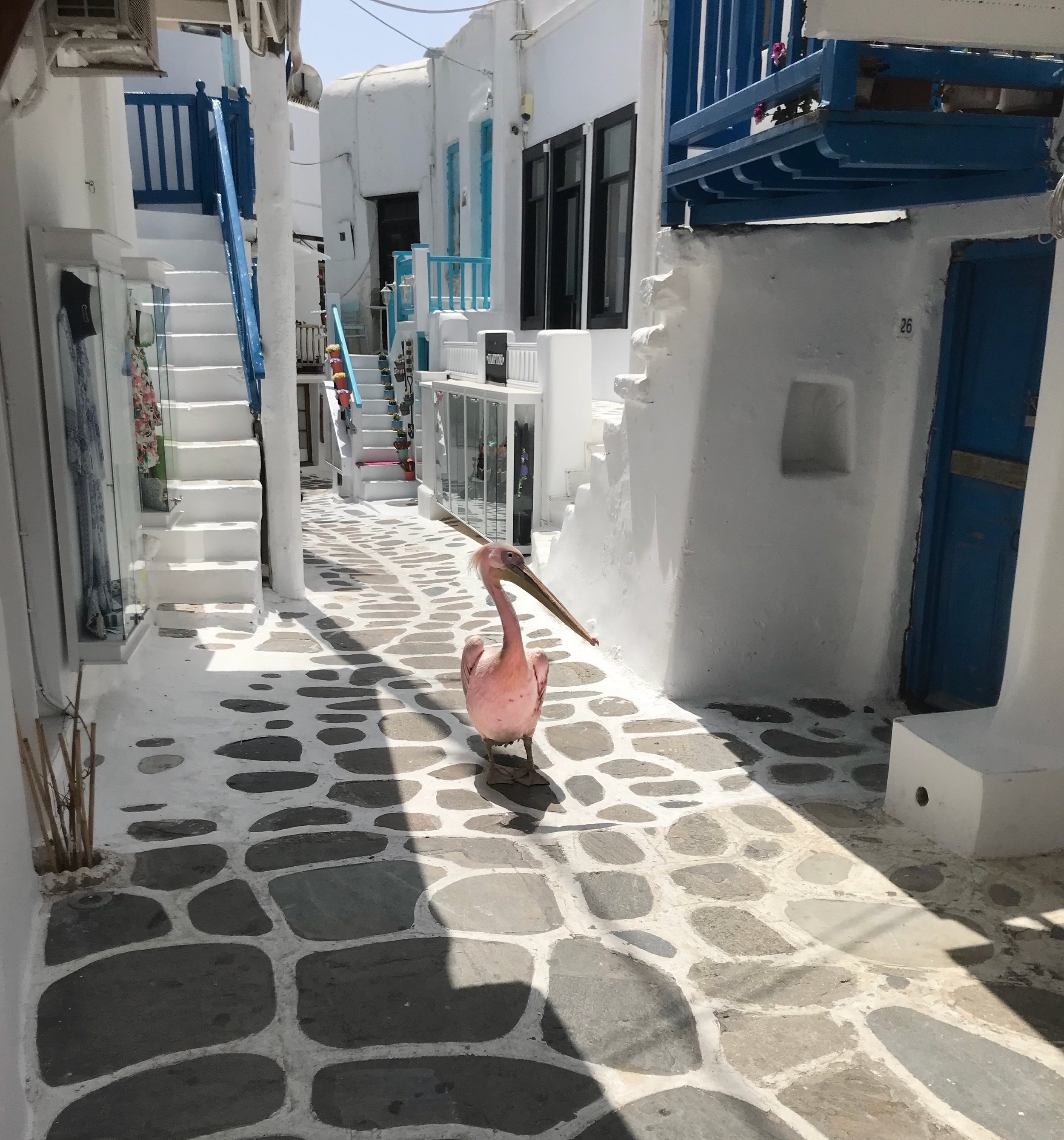A Pelican walking around Mykonos Town, it was actually the first thing we bumped into when arriving in Mykonos :)