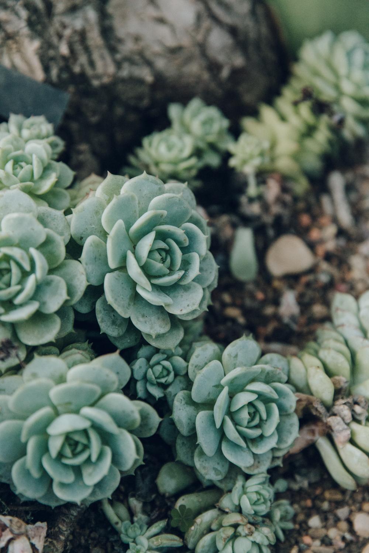 Haarkon Succulent Greenery Plants Nature Garden