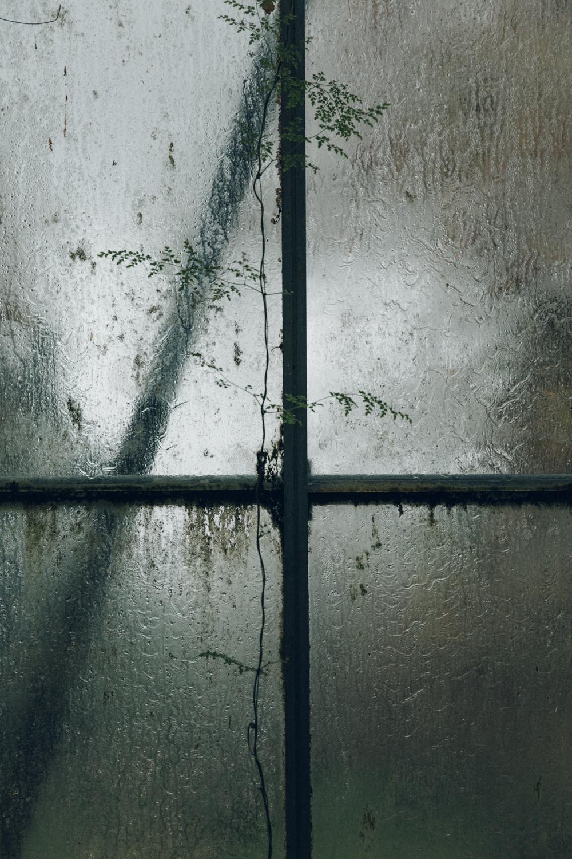 Haarkon Window Rain Wet Glasshouse