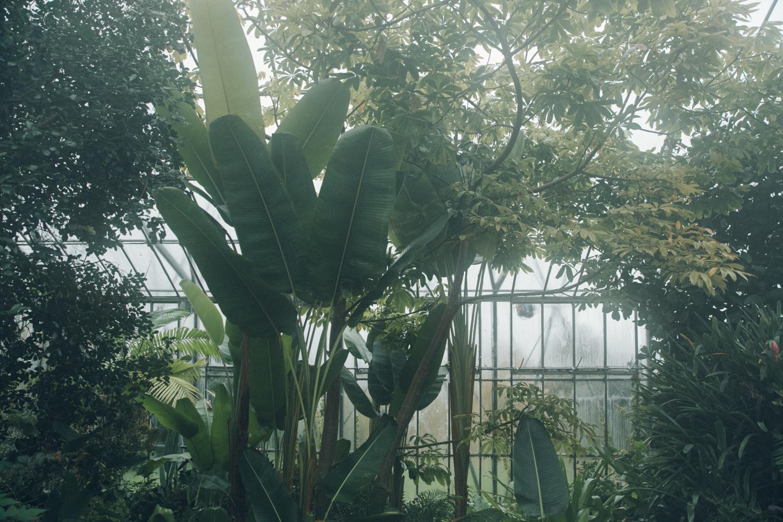 Haarkon Greenhouse Glasshouse Plants Nature Foliage Garden Botanic