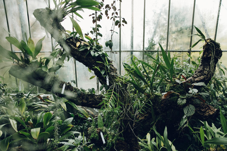 Haarkon Plants Garden Botanical Edinburgh