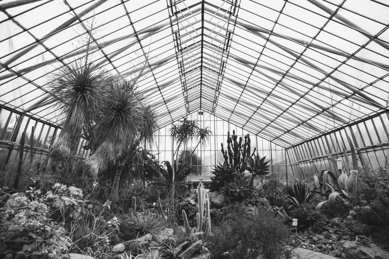 Haarkon Cactus Glasshouse Arid Cacti Edinburgh