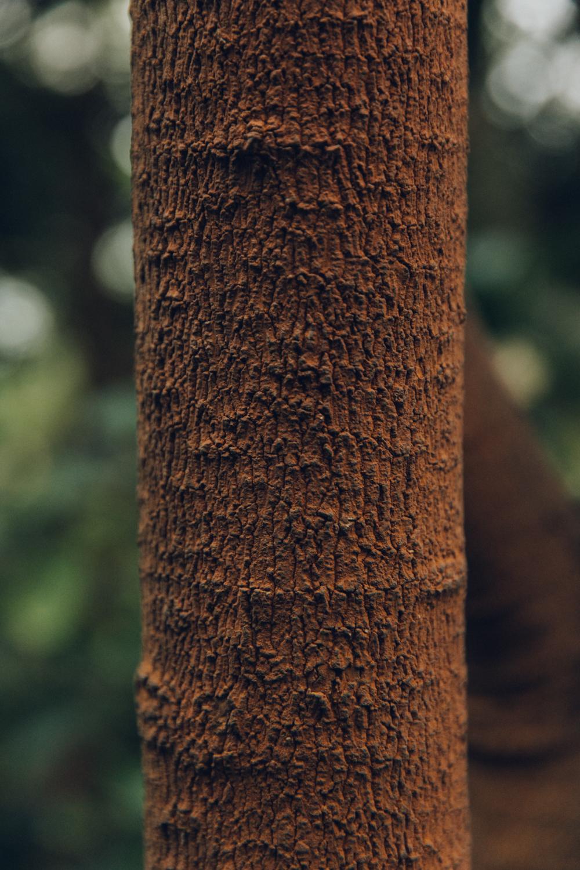 Haarkon Autumn Copper Tree Bark
