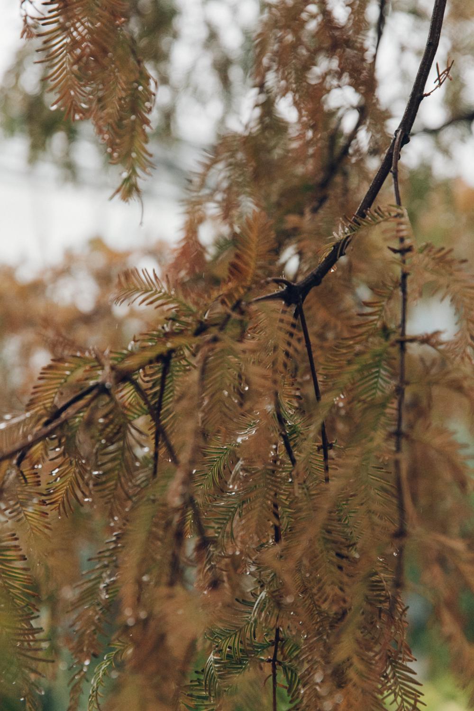 Haarkon Tree Plant Bark Colour Autumn