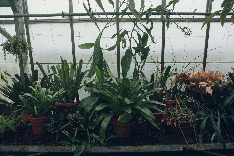 Haarkon Cactus Cacti Green Glasshouse