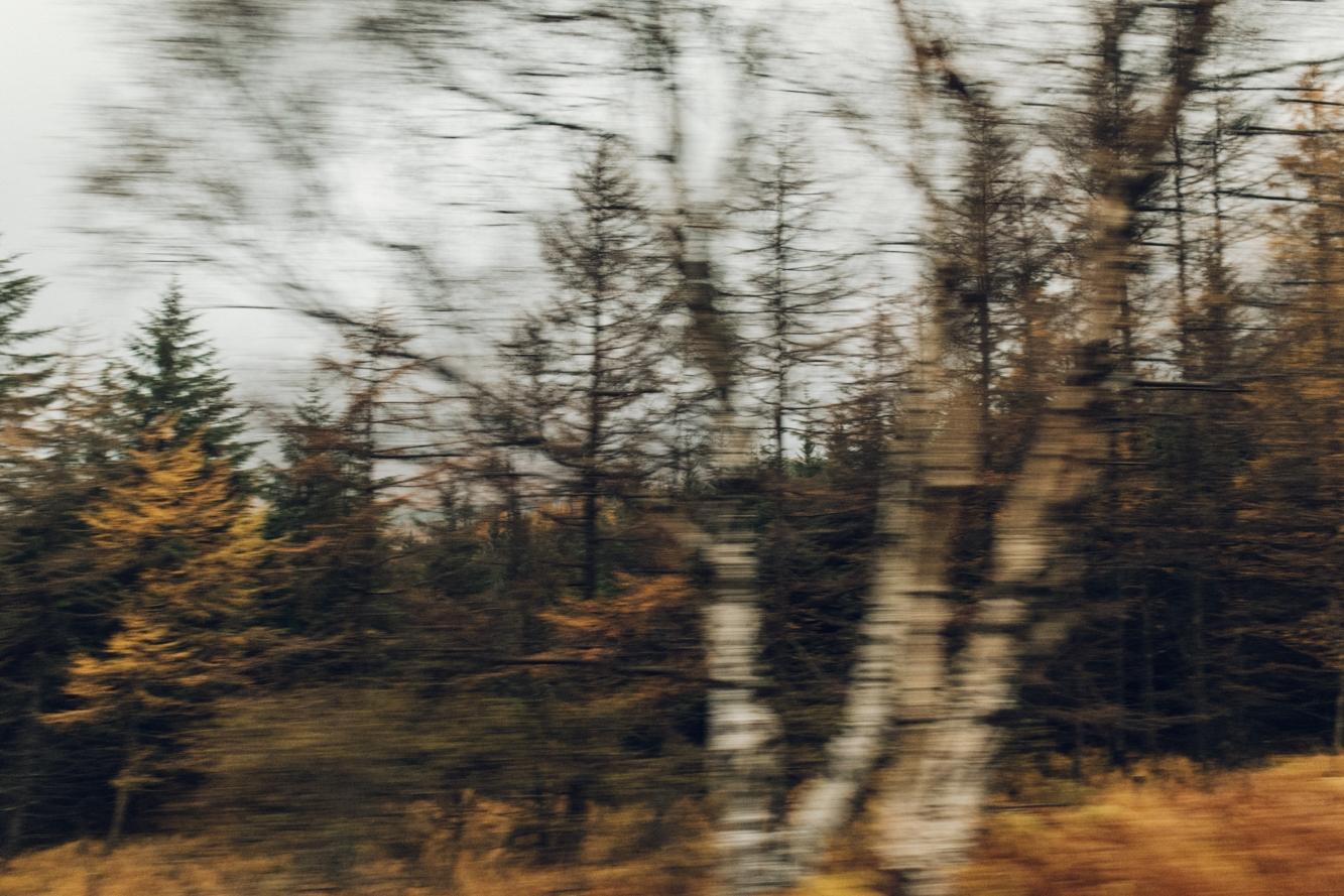 Haarkon Travel Journey Window Tree Autumn Scotland