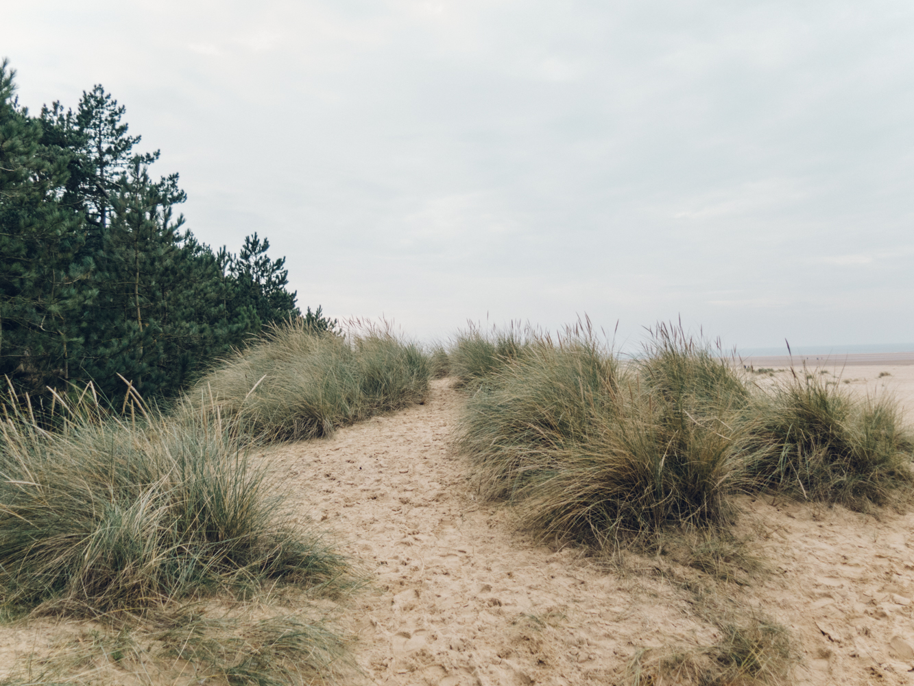 Haarkon Dune Norfolk Beach Tree Nature Coastal