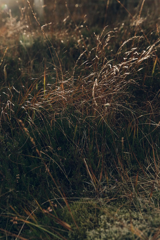 Haarkon Grass Colour Autumn Scotland Nature