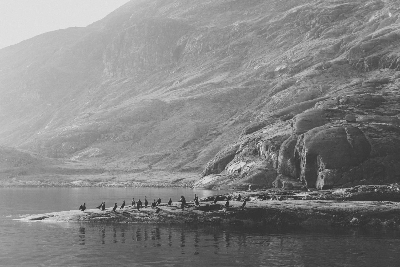 Haarkon Cormorant Shag Bird Wildlife Seal Rock Scotland RSPB