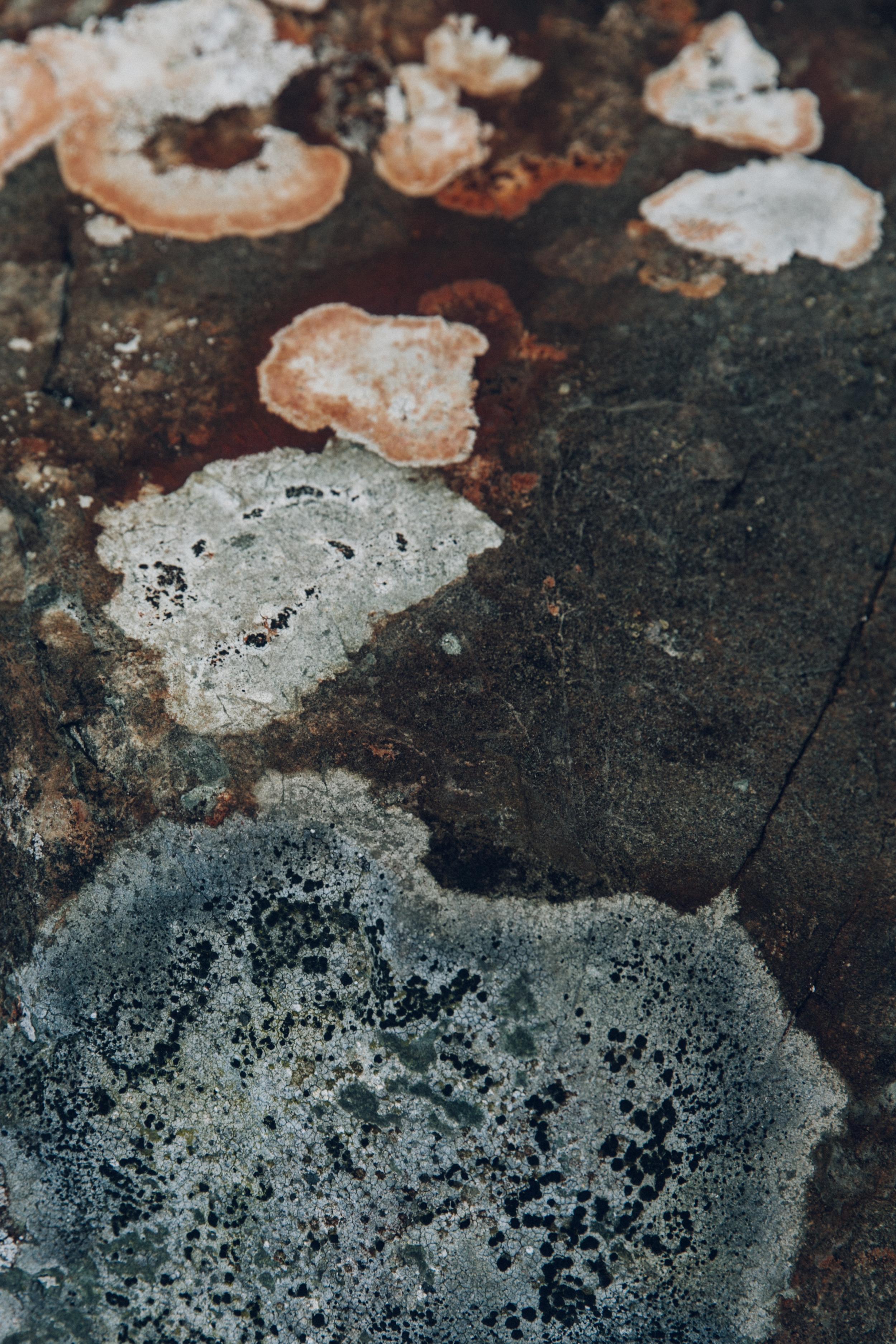 Haarkon Lichen Nature Plant Colour Moss