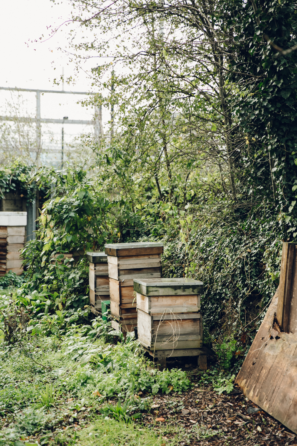 Haarkon Harkon Bee Bees Hive Hives Honey London Urban Allotment