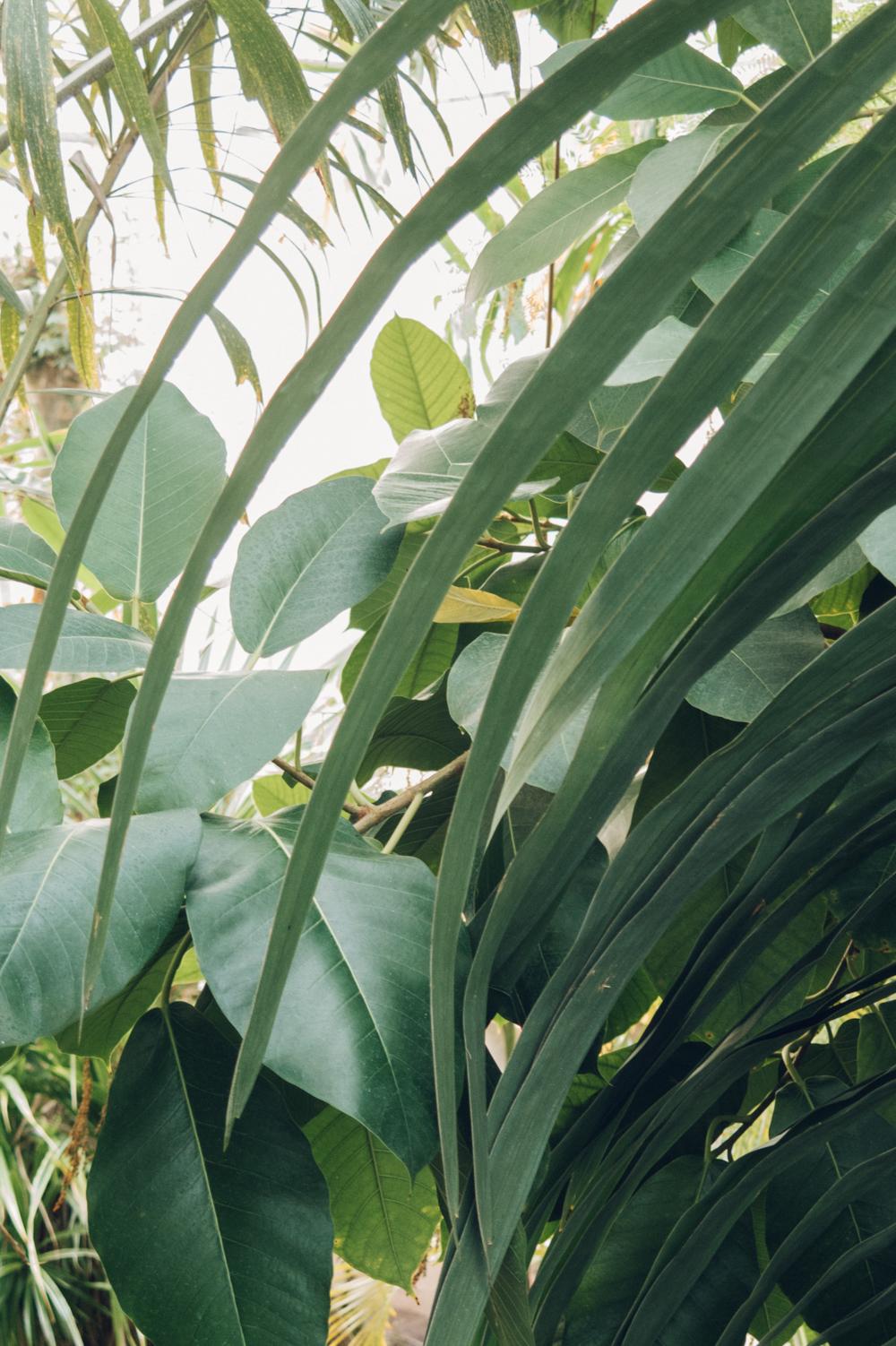Haarkon Leaf Green Plant Garden Collage