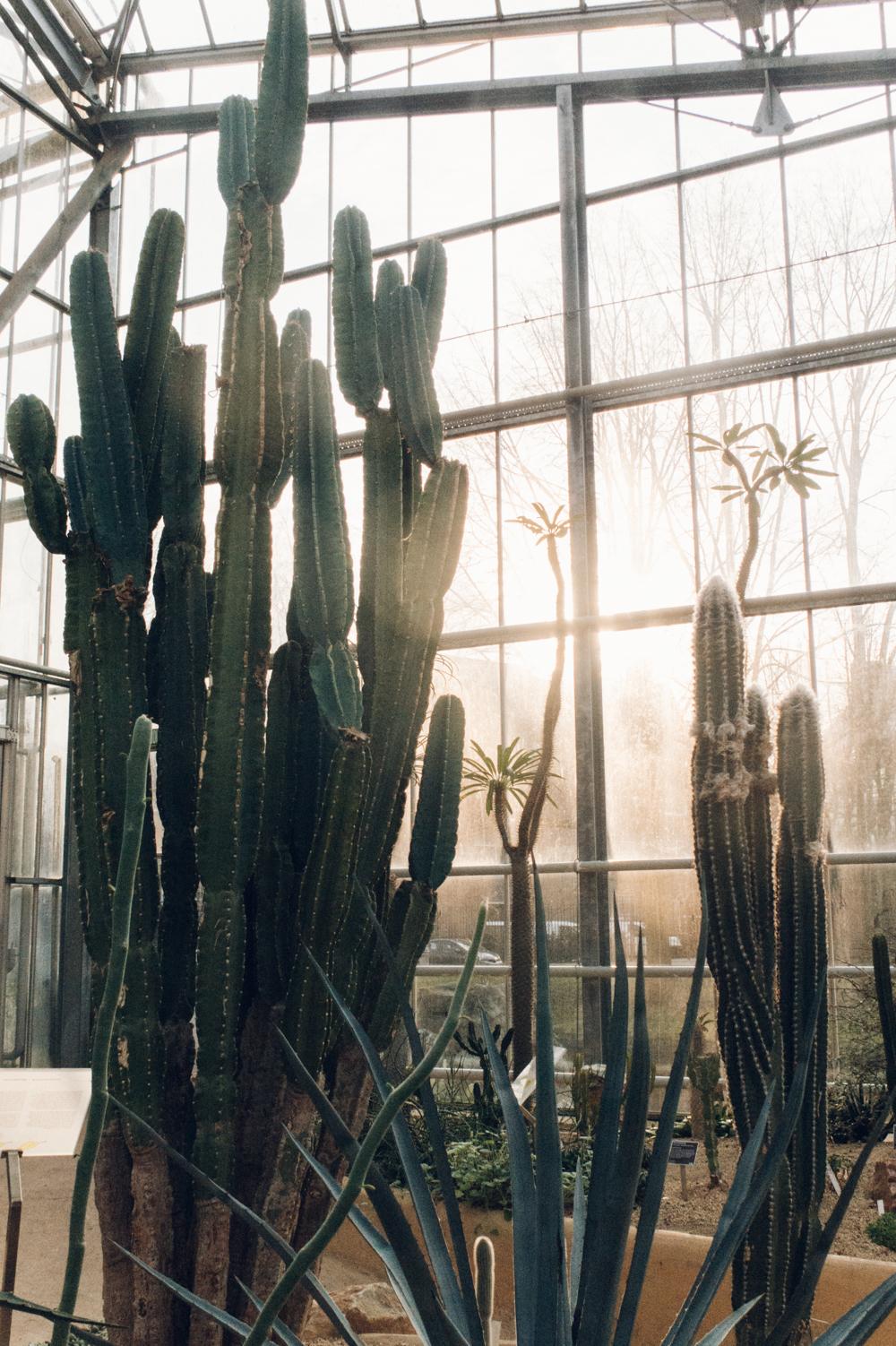 Haarkon Cactus PlantsonPink Tropical Desert Mexico Amsterdam