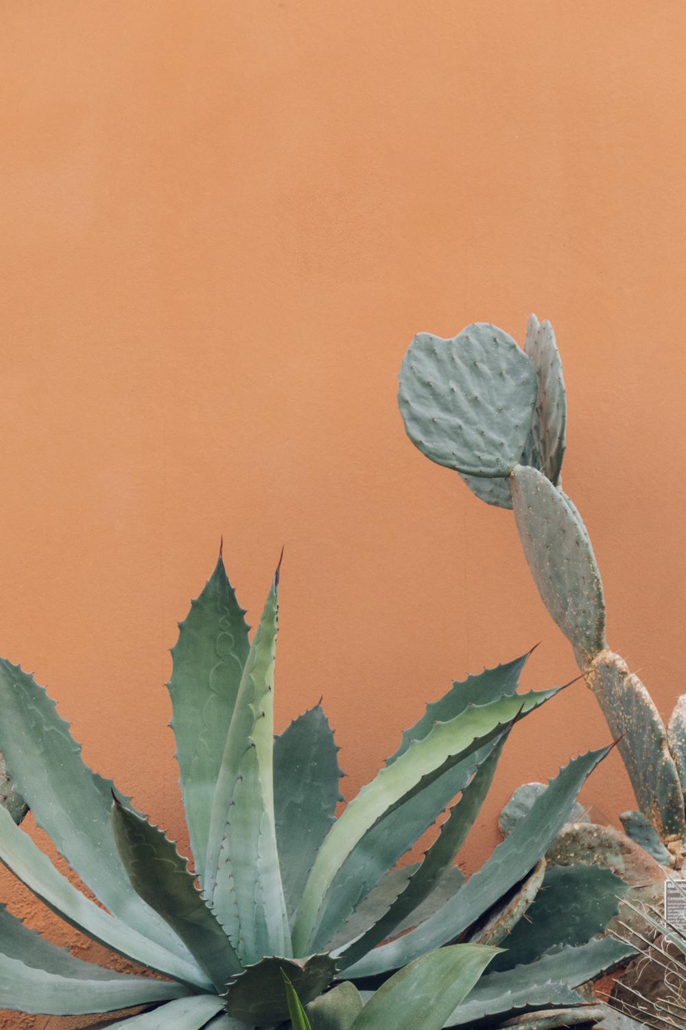 Haarkon Harken Harkon Botanical Garden Botanicus Cacti