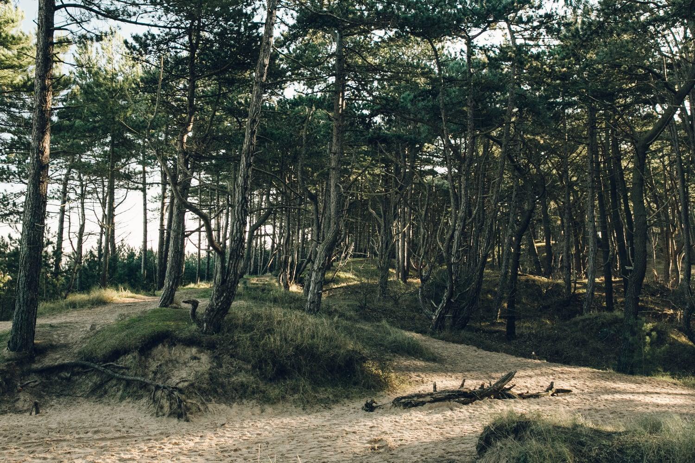Haarkon Wells Wells-next-the-sea Coast Norfolk architecture Woods