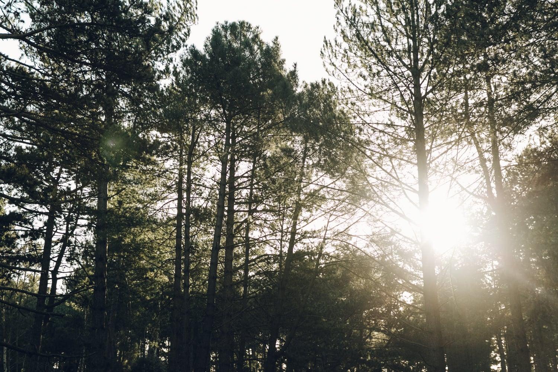 Haarkon Wells Wells-next-the-sea Coast Norfolk architecture Sun light tree woods