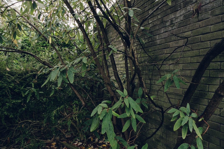 Haarkon House Design Architecture Modernist Interior garden japonica