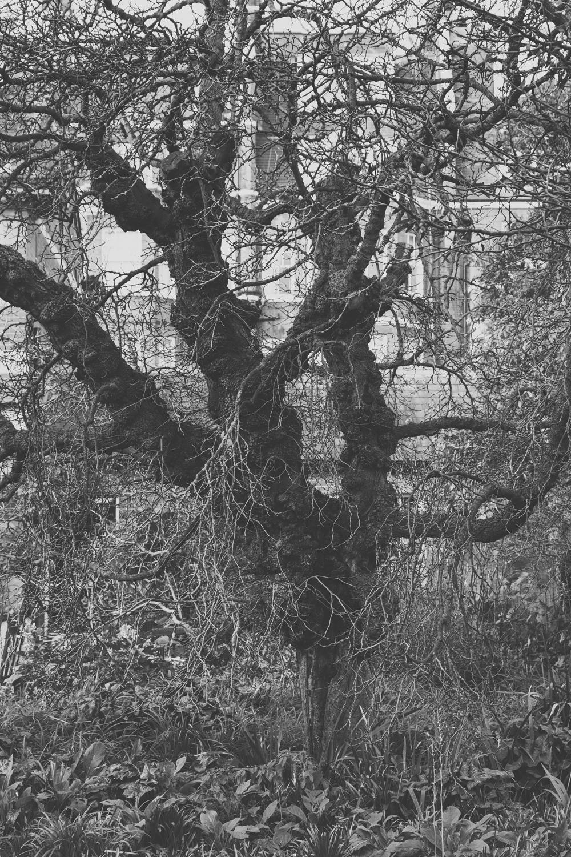 Haarkon Plants Garden Chelsea Physic Greenery Glasshouse Winter London Tree Branch
