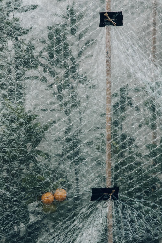 Haarkon Garden Chelsea Physic Greenery Winter Plants citrus tree