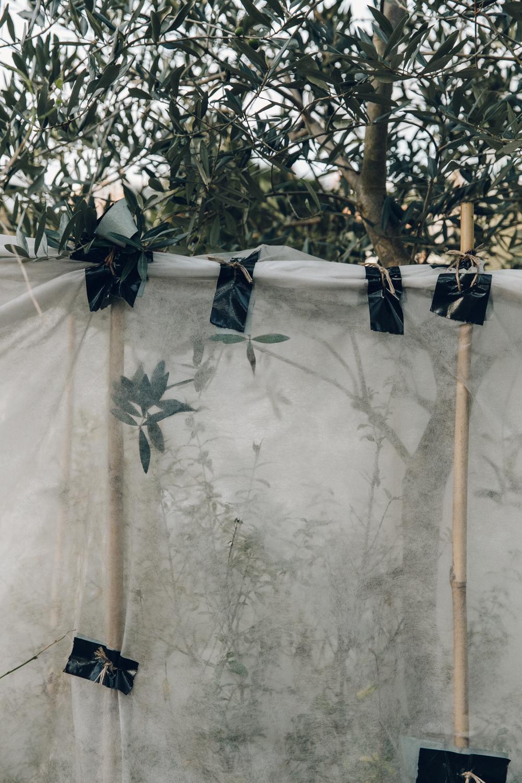 Haarkon Garden Chelsea Physic Greenery Winter Plants bamboo olive
