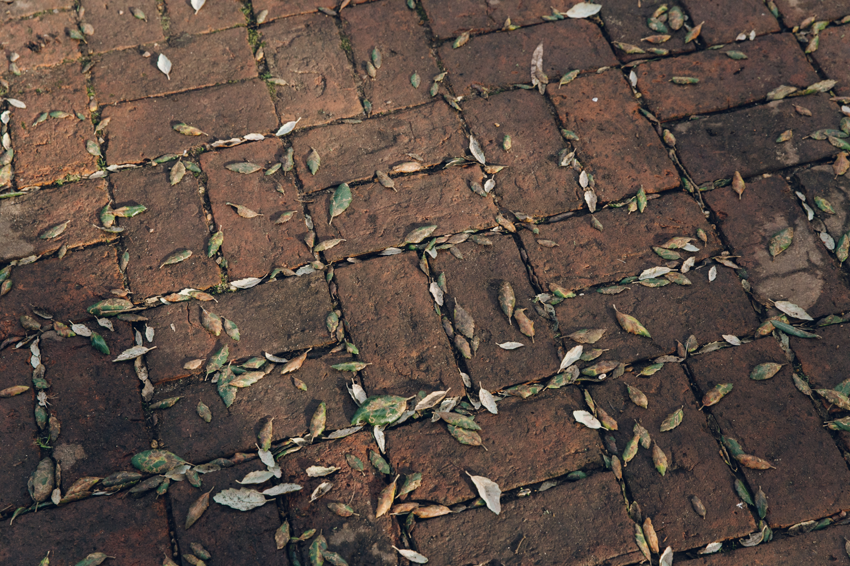 Haarkon Garden Chelsea Physic Greenery Winter Plants Floor Light Shadow Leaves