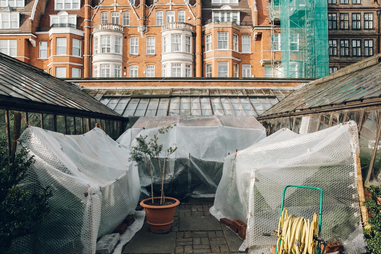 Haarkon Garden Chelsea Physic Greenery Winter Plants glasshouse greenhouse building