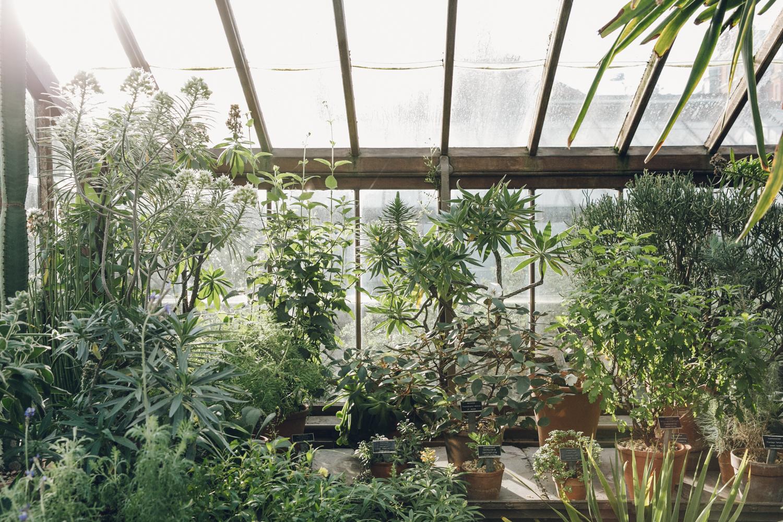 Haarkon Garden Chelsea Physic Greenery Winter Plants Greenhouse Glasshouse Cactus
