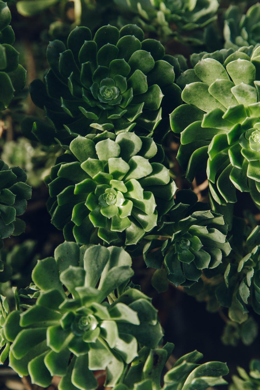 Haarkon Garden Chelsea Physic Greenery Winter Plants aeonium succulent