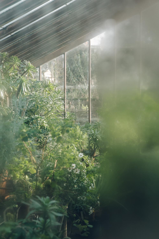 Haarkon Garden Chelsea Physic Greenery Winter Plants