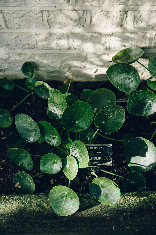 Haarkon Garden Chelsea Physic Greenery Winter Plants pilea