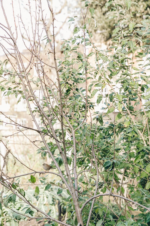 Haarkon Garden Chelsea Physic Greenery Winter Plants bird