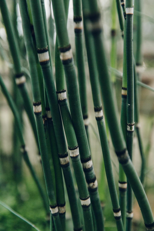 Haarkon Garden Chelsea Physic Greenery Winter Plants bamboo