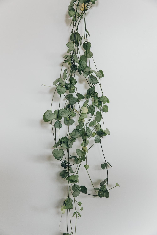 Haarkon House Home Interior room living decor design ikea plants