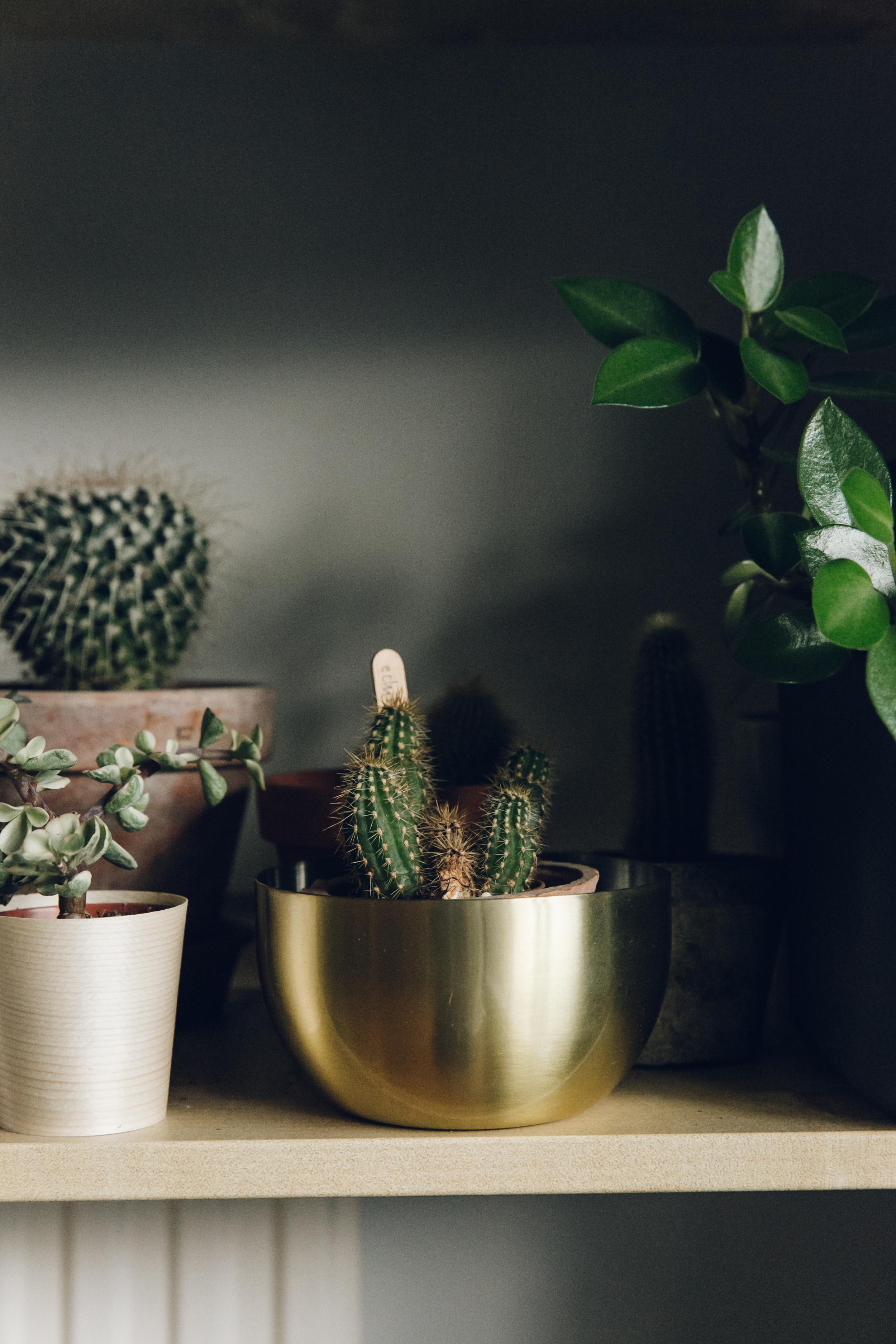 Haarkon House Home Interior room living decor design ikea plants brass