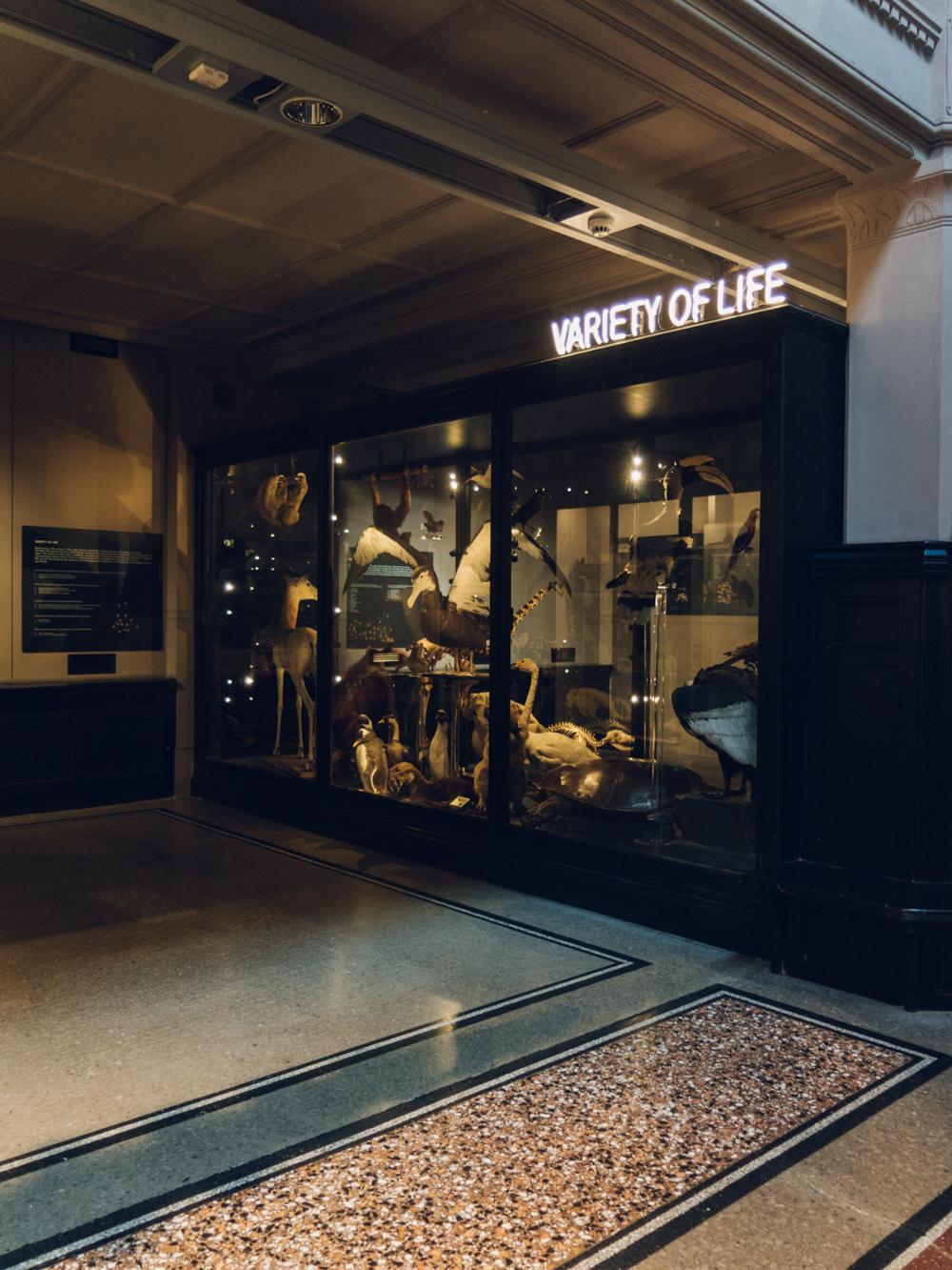 Haarkon Manchester Travel Visit England Sunshine Winter Museum Neon Taxidermy